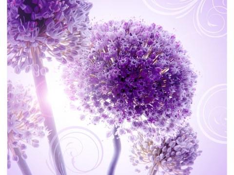 Blumenposter