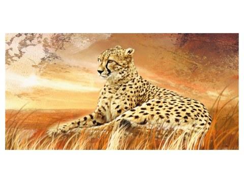 Gepard Bilder
