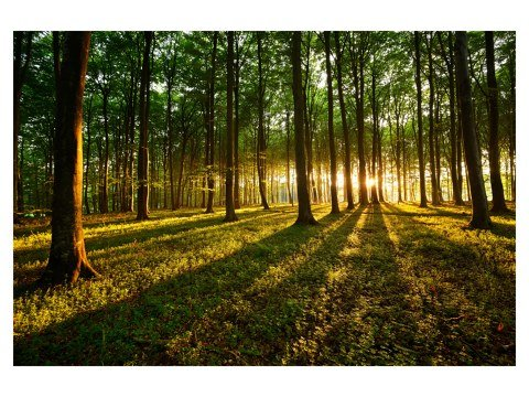Wald Bild