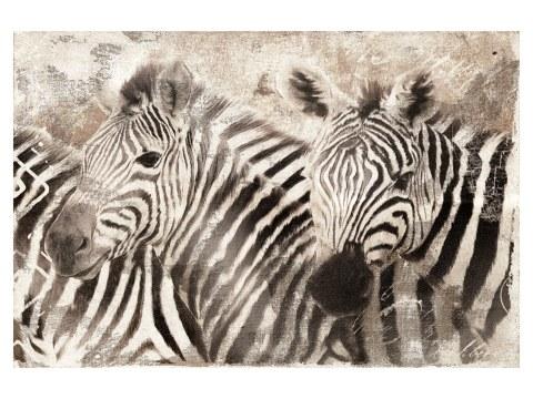 Zebra Bilder